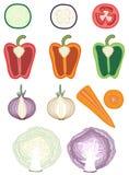 Cutaways vegetais Imagem de Stock Royalty Free