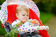 Cute adorable baby girl holding and eating fresh carrot. Beatuiful child having healthy snack. Baby girl sitting in pram royalty free stock photos