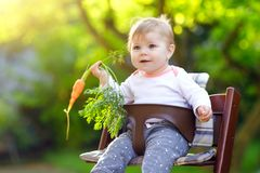Cute adorable baby girl holding and eating fresh carrot. Beatuiful child having healthy snack. Baby girl sitting in high royalty free stock images