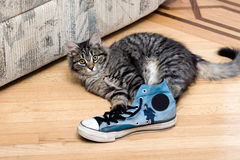 Cute adorable beautiful kitten playing with shoe Royalty Free Stock Photos