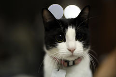 Cute adorable black white kitten. Looks on the camera Royalty Free Stock Photos
