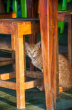 A cute and adorable cat standing on the ground under the table o. F an outdoor restaurant. staring the camera Stock Photography