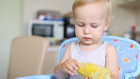 Cute adorable caucasian blond boy sitting in highchair at kitchen and enjoy eating tasty sweet boiled corn. Happy. Childhood and healthy children food concept stock video