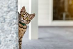 Cute adorable funny small tabby kitten peeking around wall outdoors. Beautiful young little cat playing at home backyard
