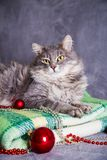 Cute furry home cat with Christmas balls and beads on green plai Stock Photography