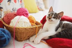 A cute adorable kitten playing with yarn Stock Photo
