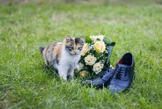 Wedding bouquet kitty shoes royalty free stock images