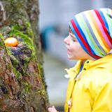 Cute adorable little kid boy making an egg hunt on Easter. Happy child searching and finding colorful eggs in domestic. Garden. Boy in spring clothes on cold royalty free stock photos