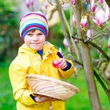 Cute adorable little kid boy making an egg hunt on Easter. Happy child searching and finding colorful eggs in domestic. Garden. Boy in spring clothes on cold royalty free stock images