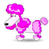 Cute Adorable Looking Poodle Royalty Free Stock Images