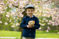 Cute adorable preschool child, boy, playing with little chicks Stock Photography