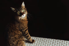 Cute adorable sweet cat sitting with amazing wise look, winter h Stock Photography