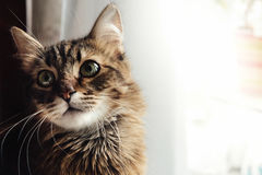 Cute adorable sweet cat sitting with amazing wise look Royalty Free Stock Images