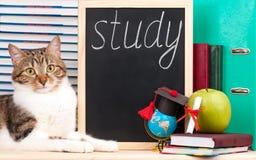 Cute adult cat Stock Photo