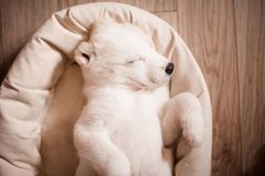 Cute baby dog sleeping stock photo
