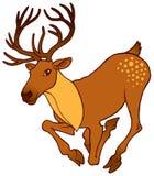 Cute alive deer running Stock Image