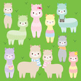Cute Alpacas Llamas Stock Photography