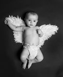 Cute angel baby boy. Portrait of a cute baby boy wearing fake angel wings, black background Stock Photography