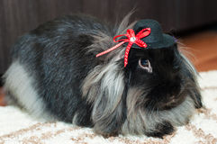 Cute angora rabbit with hat Royalty Free Stock Photography