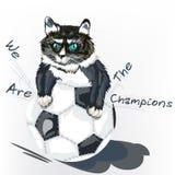 Cute angry kitty tear ball football background Stock Photos