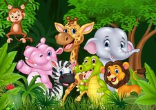 Cute Animal Africa In The Jungle Stock Photos