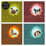 Cute animal family background with Dogs. Vector , illustration Stock Images