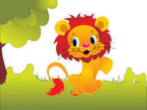 Cute animal lion Stock Photos