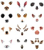 Cute Animal Masks Video Chat Application Effect Filters Set. Colored cute animal masks video chat application effect filters icon set with ears of the nose and Stock Image
