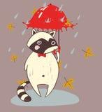 Cute animal raccoon autumn Royalty Free Stock Photos