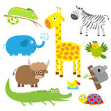 Cute animal set. Baby background. Koala, alligator, giraffe, iguana, zebra, yak, turtle, elephant, duck and parrot. Flat design. Cute animal set. Baby background Royalty Free Stock Image