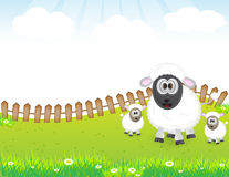 Cute animal sheep family Royalty Free Stock Images