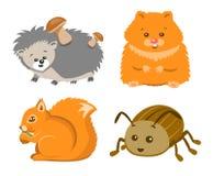 Cute Animal Squrrel, Hedgehog Hamster Beetle Stock Image
