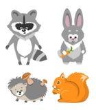 Cute Animal Squrrel, Hedgehog Racconn Hare Stock Images