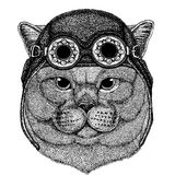 Cute animal wearing motorcycle, aviator helmet British noble cat Male Hand drawn image for tattoo, emblem, badge, logo. British noble cat Male Hand drawn image Royalty Free Stock Images