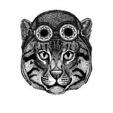 Cute animal wearing motorcycle, aviator helmet Wild cat Fishing cat Hand drawn image for tattoo, emblem, badge, logo. Wild cat Fishing cat Hand drawn image for Royalty Free Stock Photography