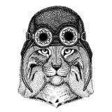 Cute animal wearing motorcycle, aviator helmet Wild cat Lynx Bobcat Trot Hand drawn image for tattoo, emblem, badge. Wild cat Lynx Bobcat Trot Hand drawn image Stock Photography
