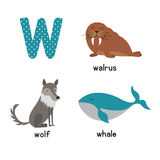 Cute Animal Zoo Alphabet. Letter W for wolf, whale, walrus Stock Photos