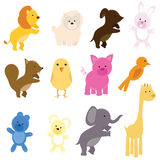 Cute animals Royalty Free Stock Photo