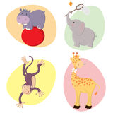 Cute Animals. Set of cute happy  jungle animals : hippo, elephant, monkey, giraffe Royalty Free Stock Image