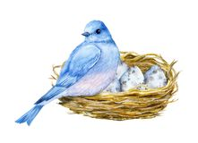 Cute little blue bird with nest and blue eggs. Watercolor illustration. Cute animals and birds. Spring symbol. Happy Easter. Blue luck bird English style. Cute Royalty Free Stock Photo