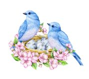 Cute little blue bird with nest and blue eggs. Watercolor illustration. Cute animals and birds. Spring symbol. Happy Easter. Blue luck bird English style. Cute Royalty Free Stock Photos