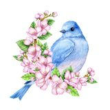 Cute little blue bird in bloom. Watercolor illustration. Cute animals and birds. Spring symbol. Happy Easter. Blue luck bird Stock Photography