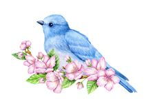 Cute little blue bird in bloom. Watercolor illustration. Cute animals and birds. Spring symbol. Happy Easter. Blue luck bird Stock Image