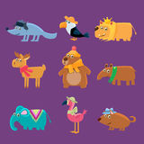 Cute Animals Collection Royalty Free Stock Image