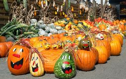 Cute arrangement of lots of pumpkins Royalty Free Stock Photo