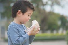 Cute Asian boy  holding a kitten. Cute Asian boy  holding a newborn kitten with sunshine in the park Stock Photography