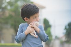 Cute Asian boy  holding a kitten. Cute Asian boy  holding a newborn kitten with sunshine in the park Royalty Free Stock Photos
