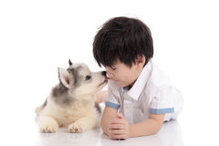Cute asian boy and siberian husky puppy lying. Cute siberian husky puppy lying and kissing asian boy on white background isolated Stock Images