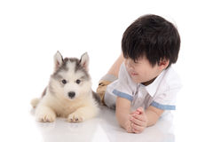 Cute asian boy and siberian husky puppy lying. On white background isolated Royalty Free Stock Image