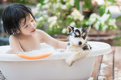 Cute asian  child bathing with siberian husky puppy Royalty Free Stock Images